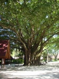 カニフィノールの中心にある木