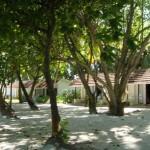 カニフィノールの木